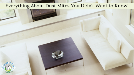 Everything About Dust Mites You Didn't Want to Know!